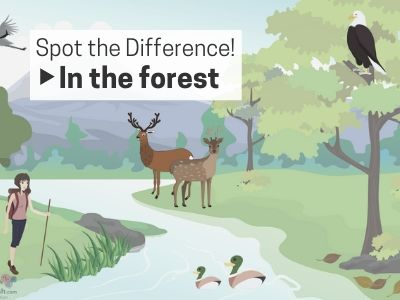 Spot the Difference - In the Forest