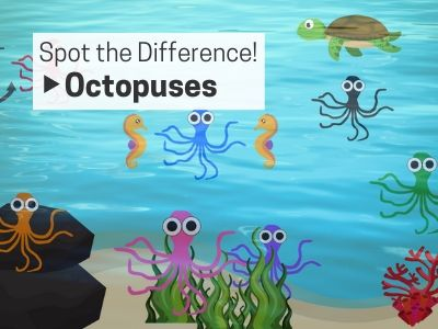 Spot the Difference: Octopuses!